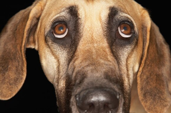 Išsigandęs šuo