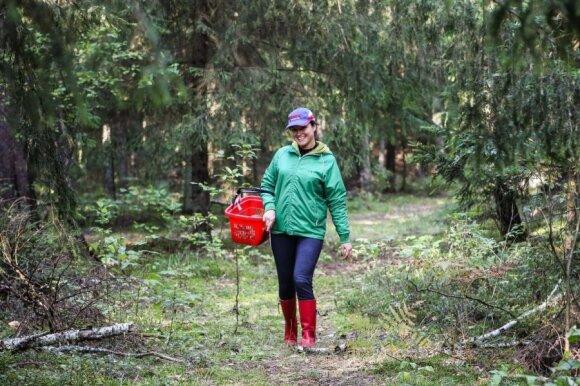 Miškuose mažėja jaunų grybautojų
