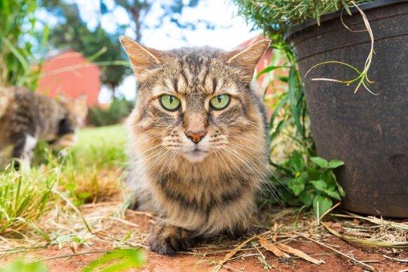 Lanai kačių prieglauda