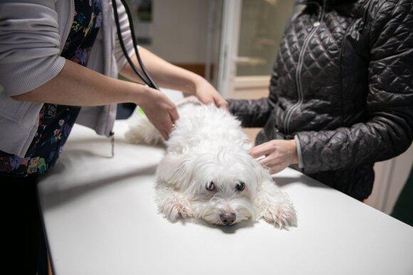 Jakovo veterinarijos klinika