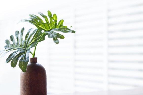 5 gudrybės, kaip įsirengti namus pagal fengšui principus