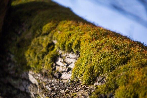 Mokslininkai įvertino senus miškus: jaunuolynai pranašesni
