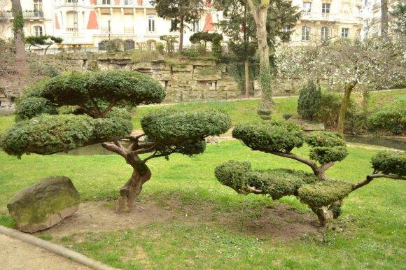 Dažnai tokie lauke augantys augalai taip pat vadinami bonsai, bet iš tiesų tai yra formuojami augalai. Nuotraukoje - kukmedžiai.