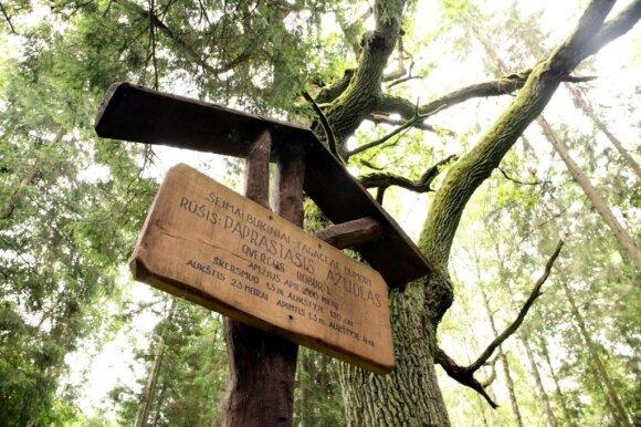 Miško pažintinis takas Troškūnuose