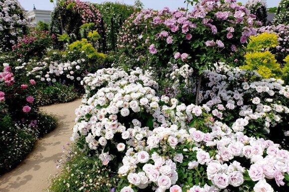 Specialistės patarimai rudens darbams sode, darže ir gėlyne