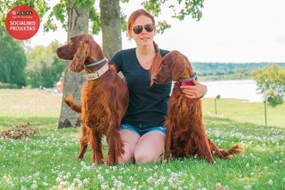 Airių seteriai – energingi šeimos šunys