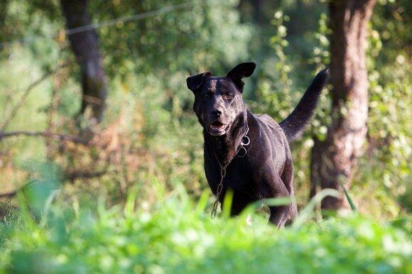Kodėl kai kurie šunys yra agresyvūs?
