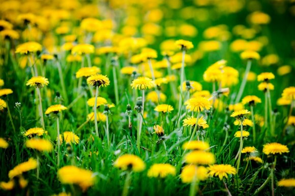 Sinoptikė: pagrindinį būsimo pavasario bruožą jau matome akivaizdžiai – laukia temperatūrų šuoliai
