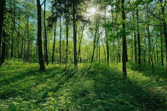 Vokiečių paieškos variklis kas kartą jums panaršius sodina medžius