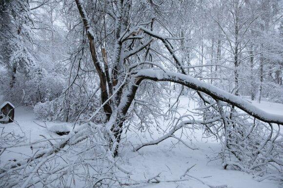 Rekordinė para: daugiausia pranešimų dėl sniego sukeltų nelaimių sulaukta iš trijų šalies rajonų