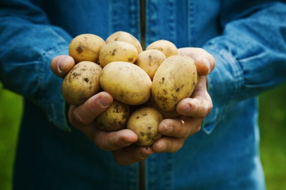 Pasakoja, kokių lietuviškų daržovių ir vaisių šiuo metu galima rasti prekybos centruose