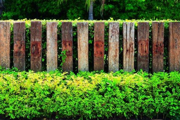 Nutarė, kiek metrų iki kaimyno sklypo negalima sodinti augalų: už pažeidimus numatė ir baudas