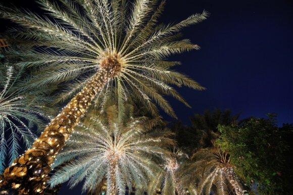 Tradicinę Kalėdų eglę Egipte atstoja išpuoštos palmės