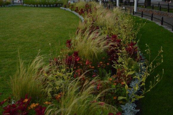 Pastaraisiais metu ypač populiarėja natūralistiniai želdynai, kuriuose dominuoja smilginiai augalai.
