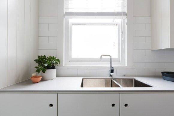 Augalai virtuvėje