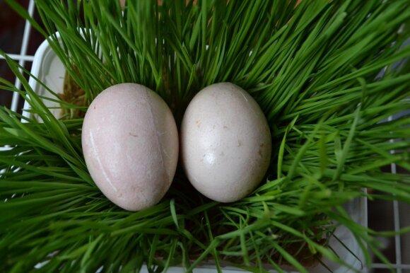 """<span style=""""color: #ff0000;"""">EKSPERIMENTAS:</span> dažėme kiaušinius be chemijos – rezultatas nustebino <sup style=""""color: #ff0000;"""">FOTO</sup>"""