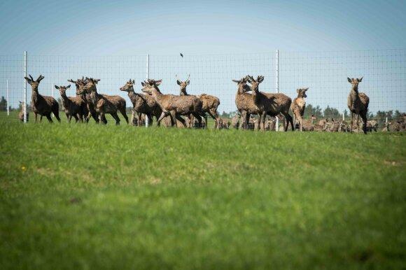Kokius ryšius nutyli aplinkos viceministrė: medžioklės su lankais istorijoje kyšo gerai pažįstamų veikėjų ausys