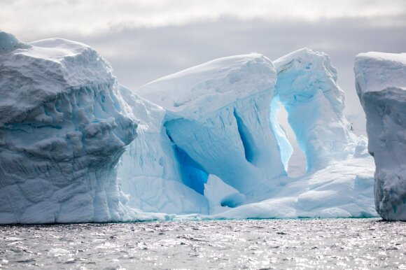 Ledynuose apstu mikroorganizmų. Shutterstock nuotr.