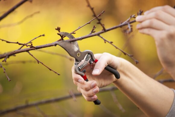 Darbai sode, kuriuos privaloma nudirbti spalį