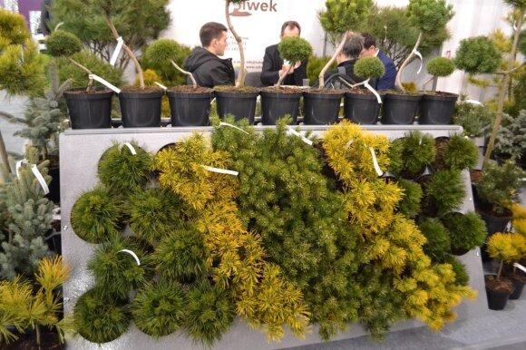 Parodoje sudaromos sutartys tarp augintojų ir tiekėjų, tame tarpe ir iš Lietuvos.