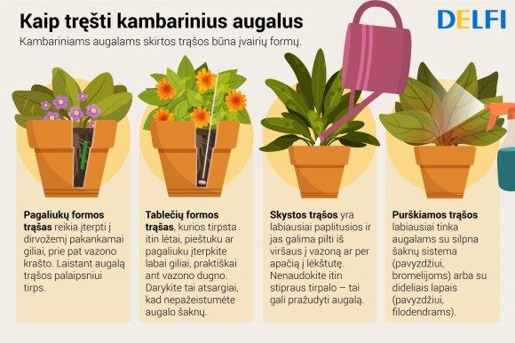 Augalų tręšimas