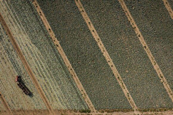 Ekologinis ūkininkavimas: ką turi žinoti, siekiantys sulaukti paramos?