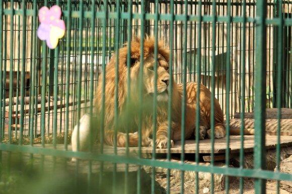 Precedento neturintis atvejis: kėdainietė zoologijos sodui po mirties paliko penkiaženklę sumą