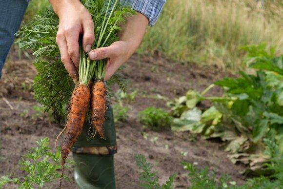 Ekologiškas žemės ūkis