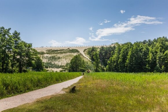 Kuršių nerijos miškai