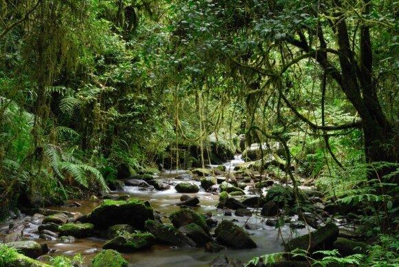 Ranomafana nacionalinis parkas, Madagaskaras