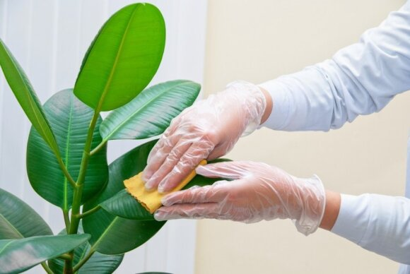 Augalai - deguonies bombos: būtina turėti namuose