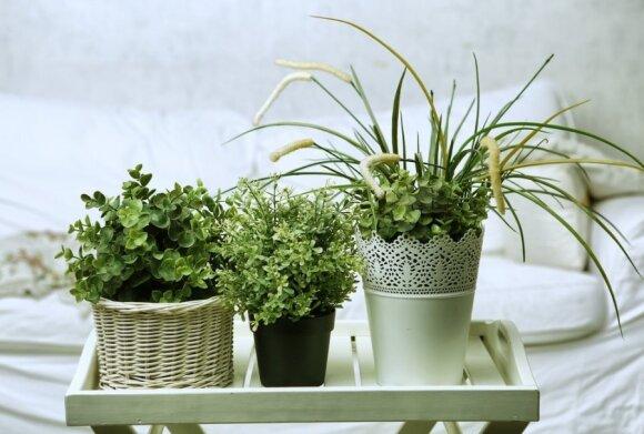 Gaivus interjeras: pavasariniai akcentai namuose