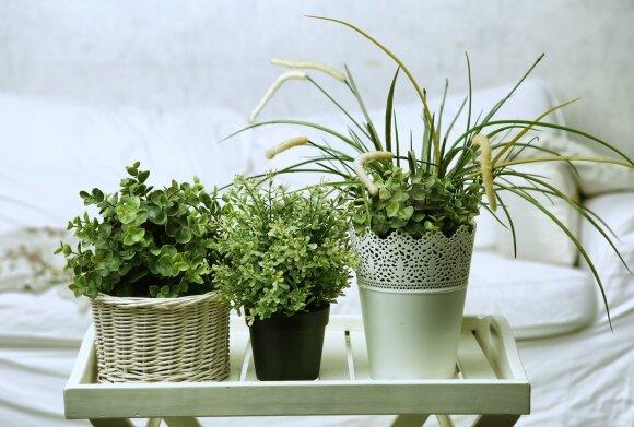 Augalai kur kas protingesni, nei manote