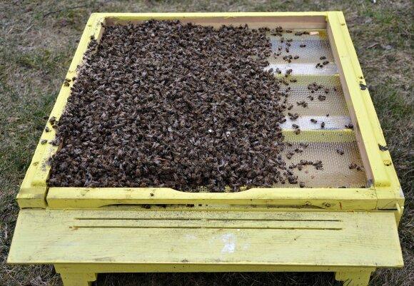 Žuvusios bitės