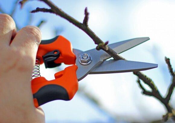 Pavasarinis medžių genėjimas: kokių klaidų nepadaryti
