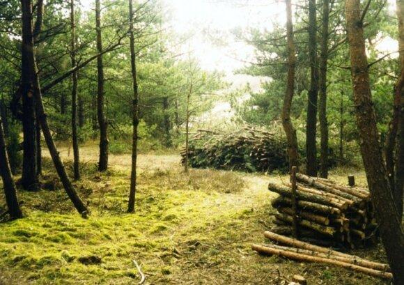 Retinami miškai Kuršių nerijoje