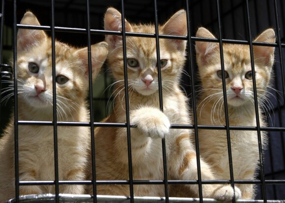 Jungtinėje Karalystėje – naminių gyvūnų krizė: atlaisvinant pandeminius ribojimus, vis daugiau žmonių atsisako savo augintinių
