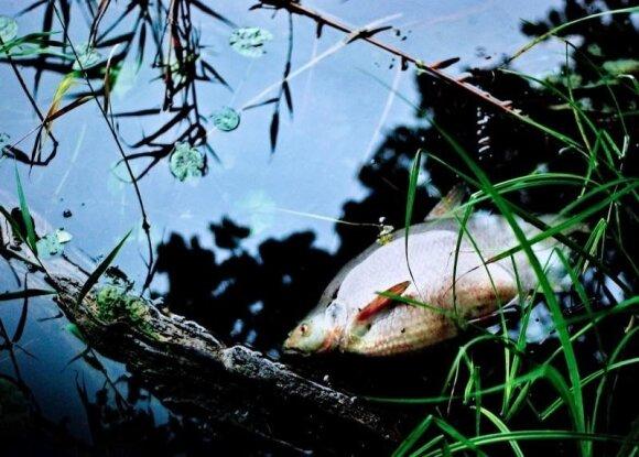 Užterštame vandenyje - negyva žuvis