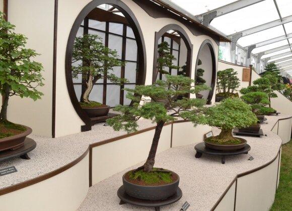 Lietuvoje bonsai medelių parodos būna itin retos, nes tai brangus malonumas, dažniausiai juos galima pamatyti tik užsienyje parodose.