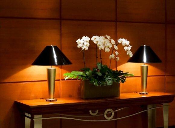 Orchidėjos interjere: kur kokios tinka, kaip prižiūrėti