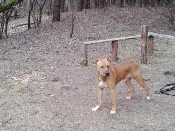Šuo Maksas ieško namų