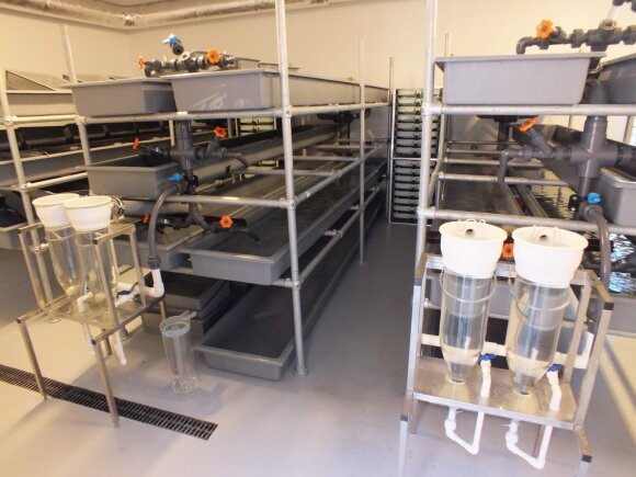 Žuvų inkubacijos sistema