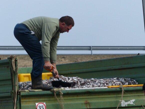 Žvejus liūdina tai, kad šiemet stintų vis dar nėra