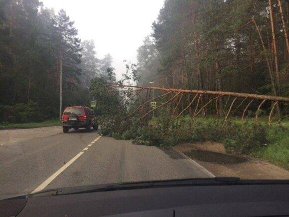 Nulūžęs medis užtvėrė kelią