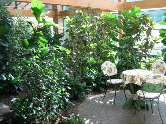 Žiemos sodas: ko reikia šios žalios oazės įrengimui?