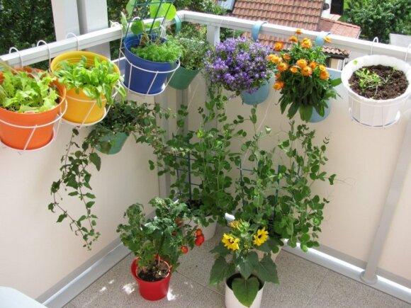 Kaip dekoruoti siaurą balkoną