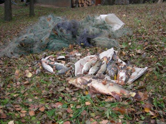 1,5 km ilgio tinkluose buvo įkliuvusios 33 žuvys