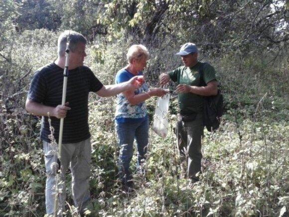 Mokslininkai renka genetinę medžiagą apie senųjų veislių obelis (Dubysos regioninio parko nuotr.)