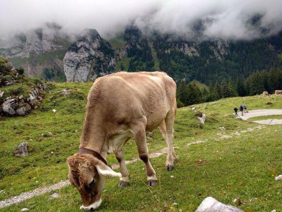 Šveicarija, Grindelvaldas
