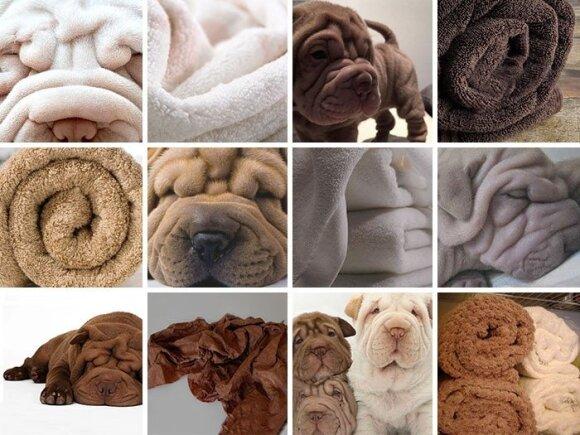 Šunys ir kiti daiktai
